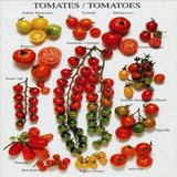 TOMATE - LYCOPERSICON ESCULENTUM - QUESTION 1064